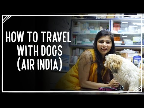 How to travel with dogs (Air India)