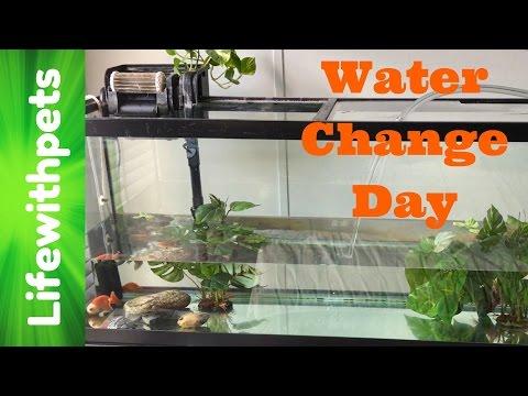Large Goldfish Water Change