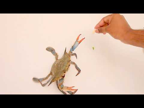 CRABS Are Not Your Pet!! DON'T Play With Them.
