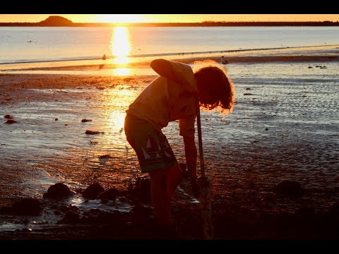 Redwood Coast Clams - Clamming in the Sunset