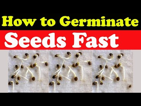 How to Germinate Seeds fast (Part 2)