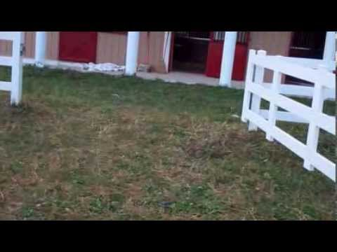 Low cost temporary vinyl horse fence gate