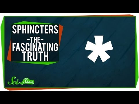 Sphincters - The Fascinating Truth