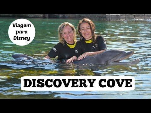 Viagem para Disney#2 - DISCOVERY COVE,  o parque dos golfinhos