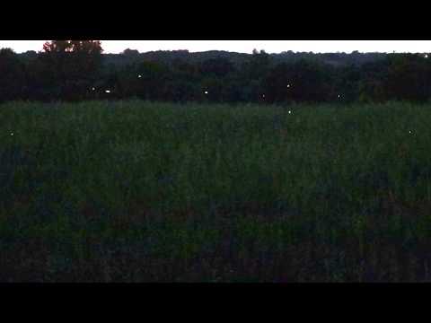 My Backyard Series: Fireflies
