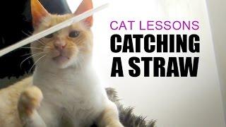 Cat Fighting to Catch a Straw