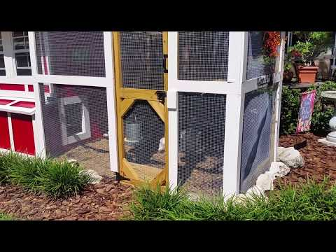 Our New Chicken Coop and Run: Take the tour