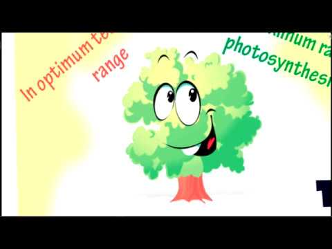 How temperature affect on Photosynthesis