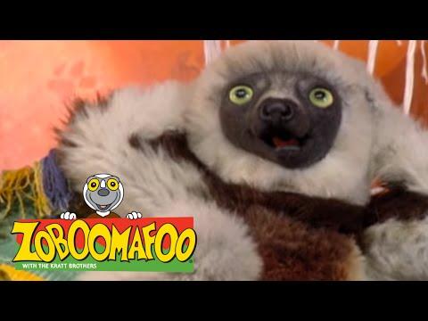 Zoboomafoo 212 - Super Lemur (Full Episode) - PakVim net HD Vdieos