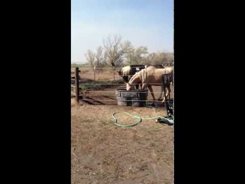 Horse vs. Electric Fence