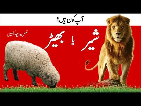 Loin or Sheep? شیر یا بھیڑ Which Life do you want to live? Success tips by M. Akmal | The Skill Sets