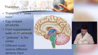 Neuroanatomy made ridiculously simple