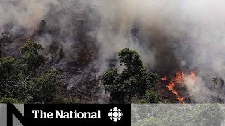 Amazon rainforest scorched by record number of wildfires