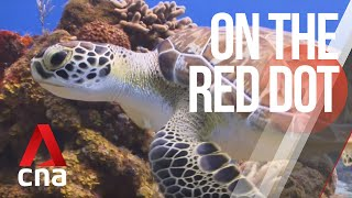 CNA   On The Red Dot   E19 - Chef Mission: The Singaporean saving sea turtles in Malaysia