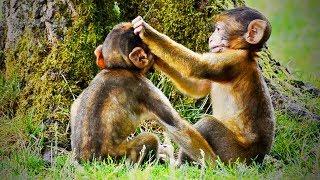 Cute Monkeys 🐵 😂  Funny Monkeys Playing (Part 2) [Funny Pets]