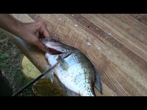 Cleaning Crappie Fail