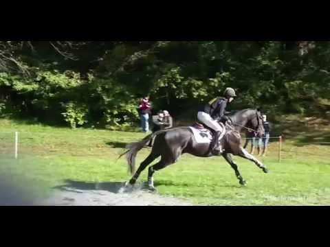 How to Develop Young Horses into Champions - The Riding Horse Repair Manual