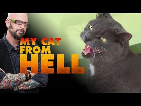 Remember Sebastian  Jackson Galaxy Recalls The Struggle To Socialize This Violent Cat