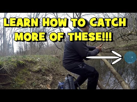 HOW TO: Catch MORE Trout! My FAVORITE TROUT SETUP Introduced! (Northeast Philadelphia, PA)