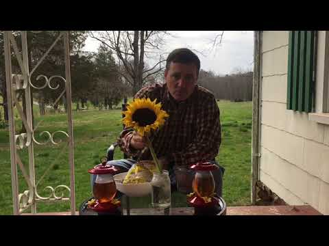 Proper Care Of Hummingbird Feeders And Nectar Solution Facts And Myths