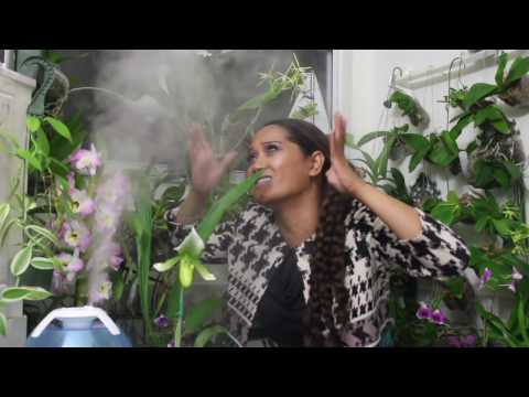 BEST HUMIDIFIER FOR ME & MY ORCHIDS - ANYPRO