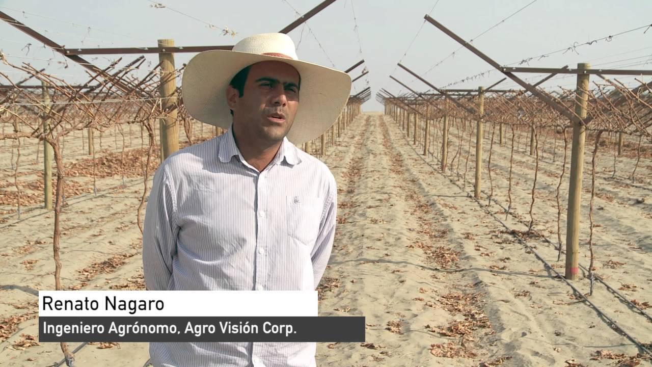 Megaproyecto Olmos: un desierto convertido en oasis