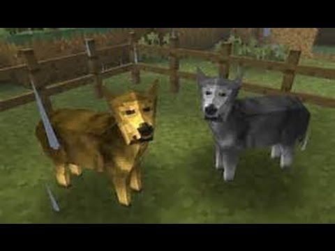 Survivalcraft how to Tame a Wolf!!!!
