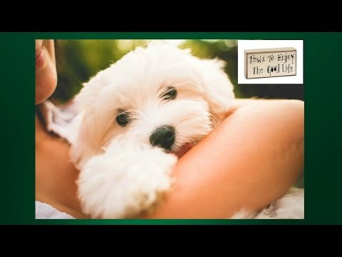 Maltese Potty Training. Housebreaking your Maltese. Maltese Potty Training Tips