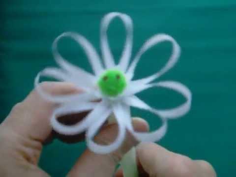 Straw flower blooming