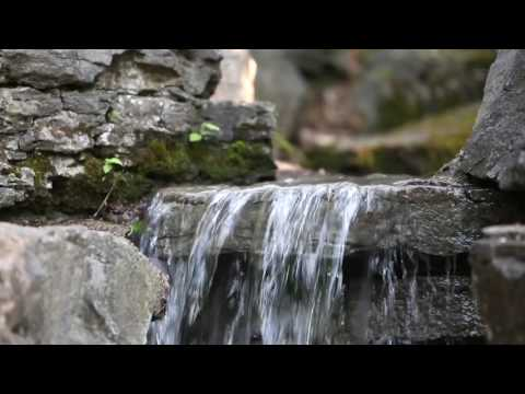 Calming Animated Virtual Screensaver: Jungle Sounds Waterfall Stream