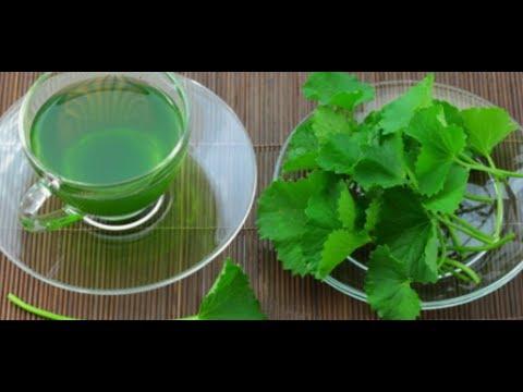 DIY brain booster for kids, brahmi leaves tea, memory enhancer