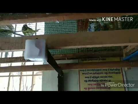 EPS-4 bird's cage in Tamil