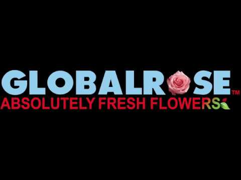Guard Petals on Roses - GlobalRose on Youtube