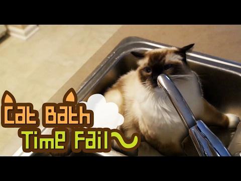 Cat Bath Time Fail.