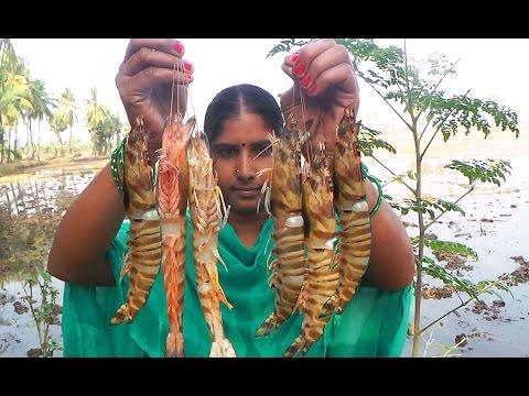 tiger prawns curry recipe in village girl cooking - Shrimp big sized recipe drumstick, eggplant
