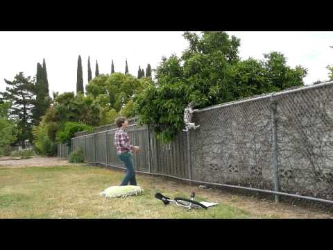 Dog scaling chain link fence