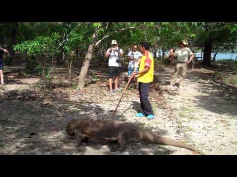 Komodo dive trip with Island hop