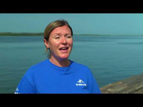 Endangered Sea Turtles Returned to Sea by SeaWorld Orlando at Canaveral National Seashore