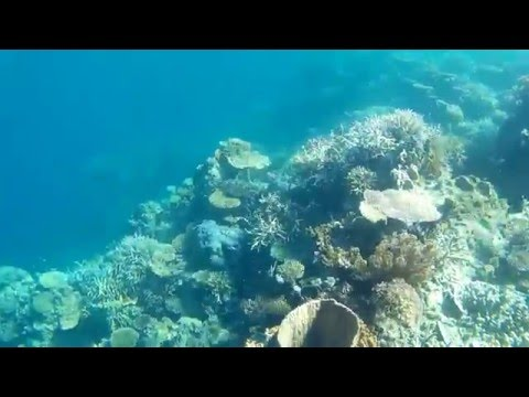 Snorkling at amazing coral reefs near Apulit Island Palawan Philippines.