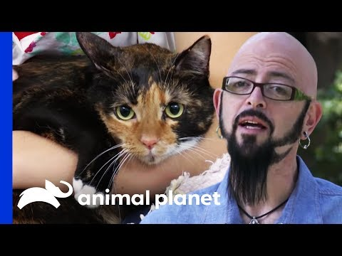 Cat with PTSD is Reformed | My Cat From Hell