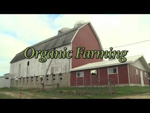 Making All-Natural Organic Cheese the Old-Fashioned Way
