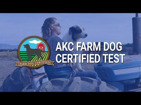AKC Farm Dog Certified Test