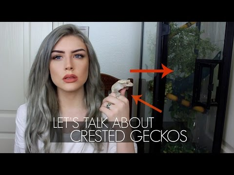LET'S TALK ABOUT CRESTED GECKOS (Care Guide)
