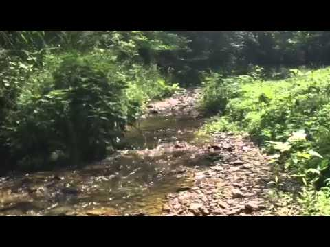 Swimming hole creek