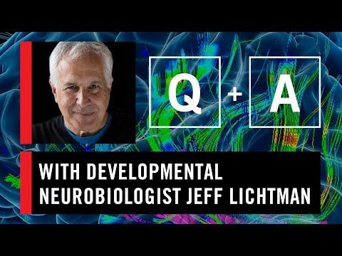 WS CONNECT Q & A with Jeff Lichtman