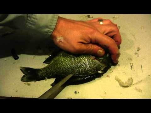 How to Fillet a Sunfish or any Panfish - Sunfish and Panfish Cleaning