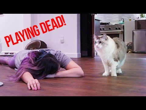 Faking My Death In Front Of My Cats