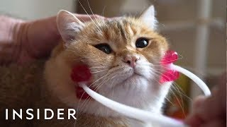 31 Pets Products For Animal Lovers | The Ultimate List