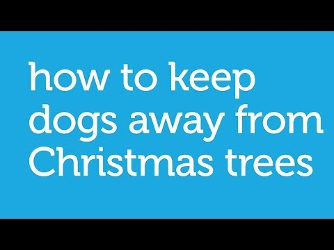 How to Keep Your Dog Away from The Christmas Tree - by Petco