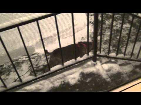 Brick & Zeke; snow blown yard